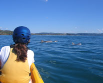 img: Kayak with Dolphins in Byron Bay