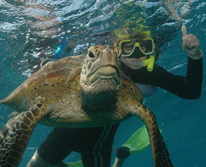 img: 2 Day / 1 Night Liveaboard - Snorkel Trip