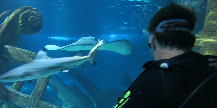 Sharks Sea Life Mooloolaba