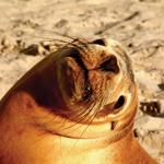 Kangaroo Island_Seal