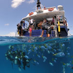 Great Barrier Reef Osprey Day Tour - Diving