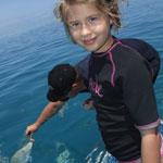 Great Barrier Reef Osprey Day Tour - Feeding Fish
