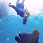 Great Barrier Reef Osprey Day Tour - Snorkelling Underwater