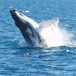 Great Barrier Reef Day Tour - Passions of Paradise Humpback Sightseeing