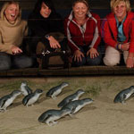 Phillip Island Penguin Tour - Penguin Parade