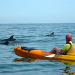 Kayak with Dolphins in Byron Bay - Dolphins