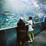 SEA LIFE Melbourne Aquarium Entry - Fish Bowl