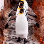 Melbourne Aquarium Entry - Penguins