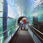 Melbourne Aquarium Entry - Underwater Aquarium