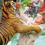 Australia Zoo Entry - Tiger