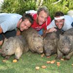 Australia Zoo Entry - Wombats