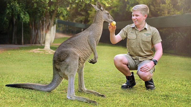 Robert Irwin feeding a Kangaroo