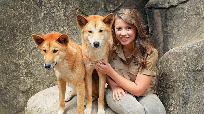 Bindi Irwin with two dingos