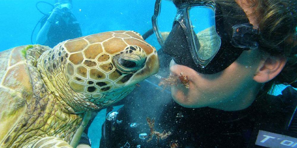 Turtle Kiss