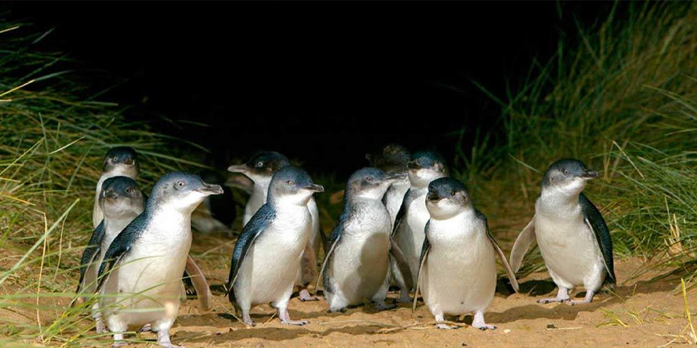 Group shot of penguins