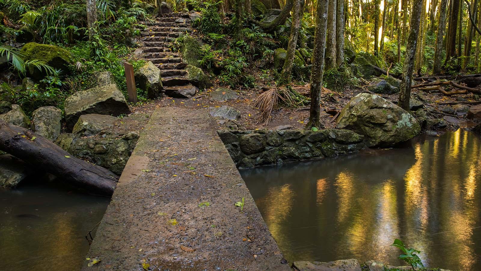O'Reilly's Mountain - Bridge