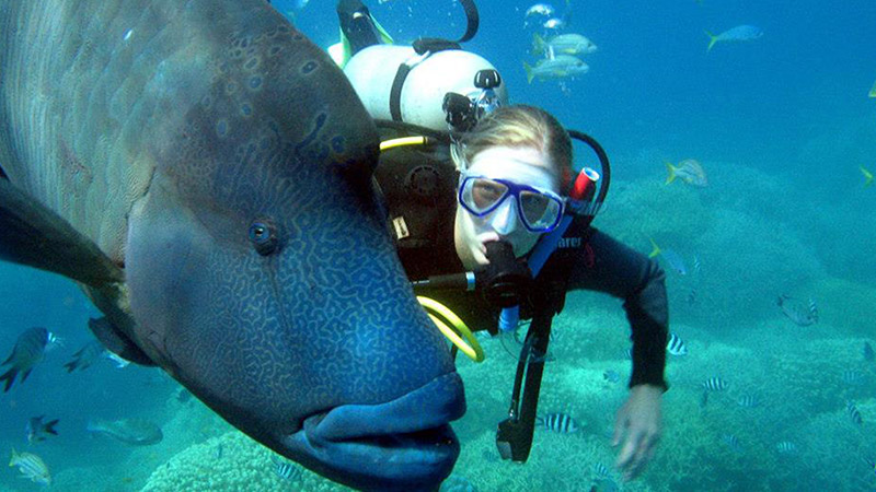 diving with big fish