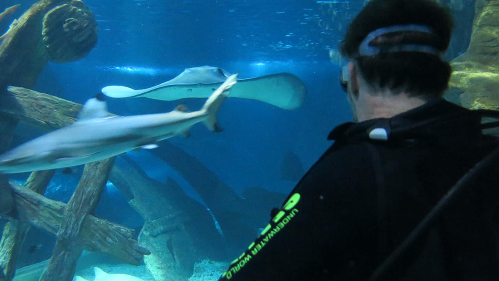watching sharks and stingrays