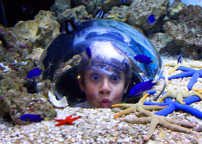 Sea Life Mooloolaba RETURN to Brisbane