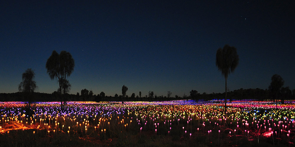 Field of Lights at night