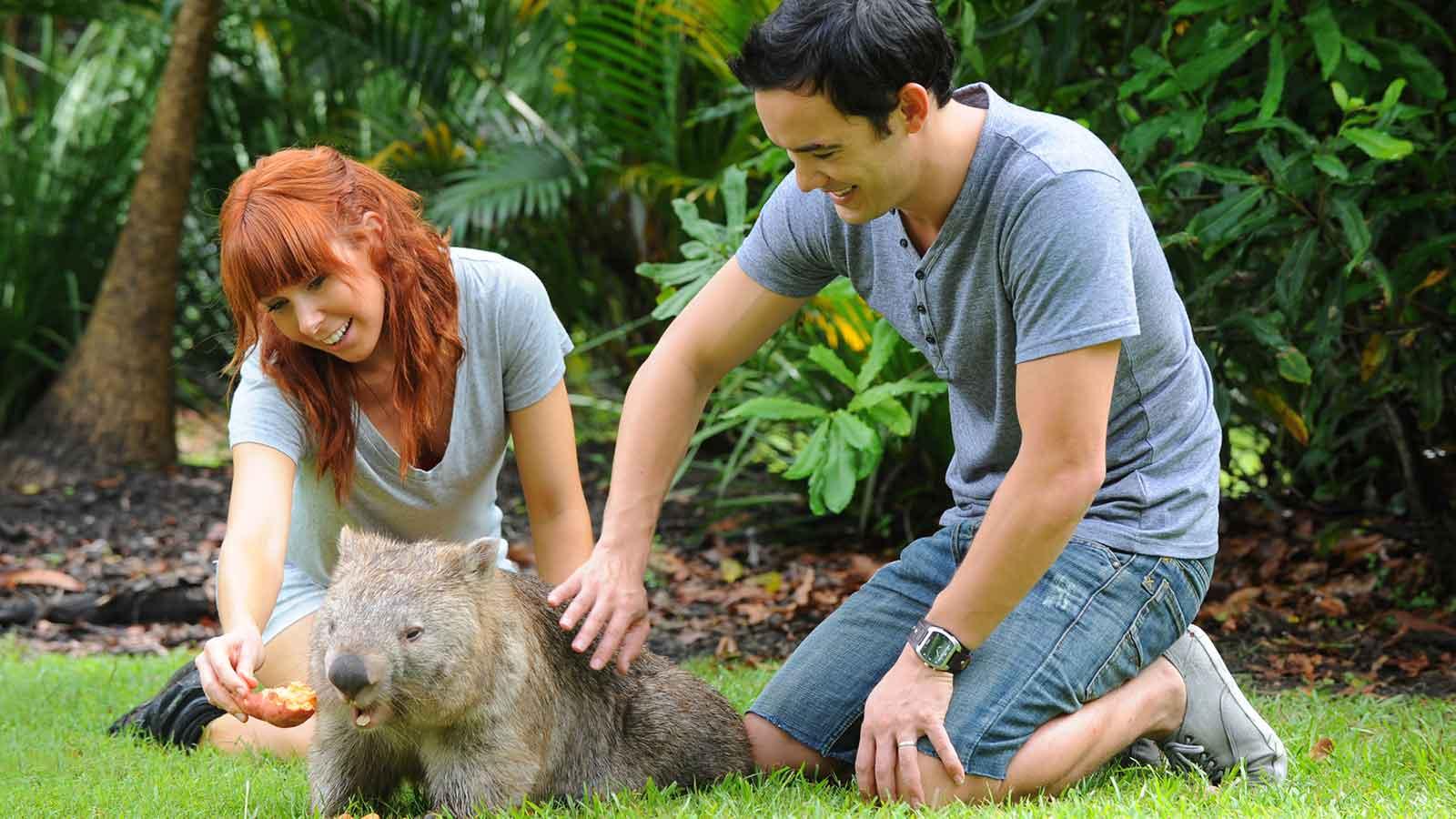 patting a wombat